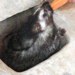 African rodent uses 'poison arrow' toxin to deter predators