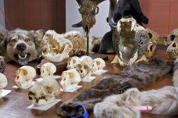 Almost 400 items of illegal animal parts were seized by investigators during a raid in Sydney