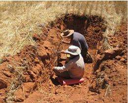 Ants, termites boost wheat yields