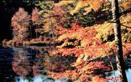 Are New England's Iconic Maples at Risk?