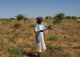 Around 13 million people are believed to live in Sudan's vast woodland savanna, or gum arabic belt