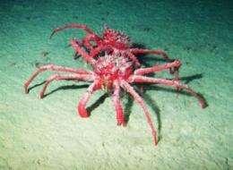A sea change, deep under Antarctic waters
