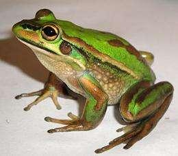 Big leap in understanding frog threat