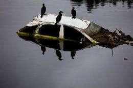 Birds sit on a wrecked car submerged in a river amid the tsunami devastation in Kesennuma, Miyagi prefecture in April