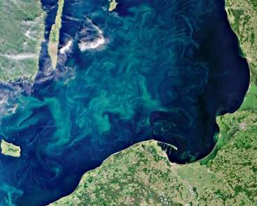 Blooming ocean fronts