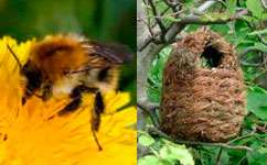 Bumblebee nest boxes don't work