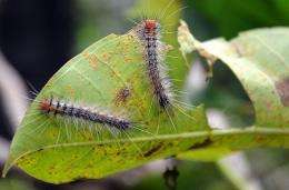 Caterpillars crawl over a leaf