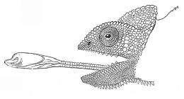 Chameleon's ballistic tongue inspires robotic manipulators