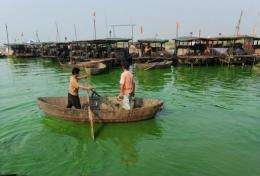 Chinese workers clean up the green algae floating in Caohu lake in Hefei