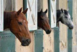 Concern over the killer Hendra virus mounted in Australia Wednesday after a sixth horse died in an outbreak
