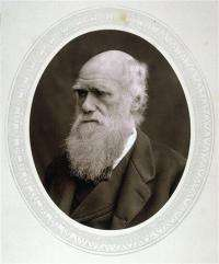 Darwin's travels may have led to illness, death (AP)