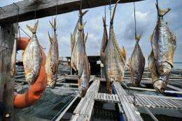 Dried fish hang in the sun at a floating farm in Singapore
