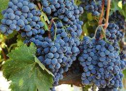 Economy and weather put the squeeze on wine grape supply, survey finds