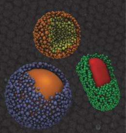 Engineers discover nanoscale balancing act that mirrors forces at work in living systems