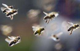 Europe's parliamentarians voted overwhelmingly to urge the EU to provide more funding for the beekeeping sector
