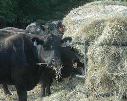 Expert: Hay test can lead to more efficient feeding during drought
