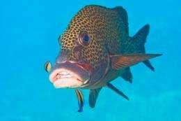 Fish weight-watchers