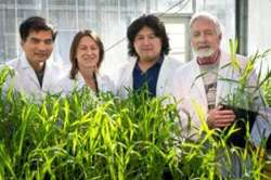Food shortages and plant genes