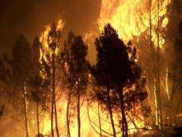 Forest fires are becoming larger and more frequent