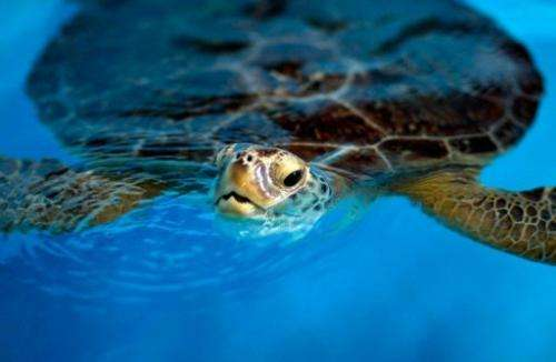 Gathering of turtle eggs poses a threat to the species