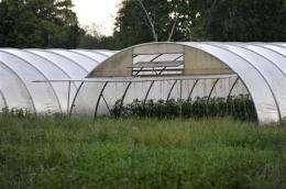Germany still seeking reason for E. coli outbreak (AP)