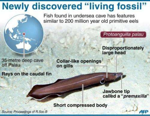 Graphic on a newly discovered species of eel found in an undersea cave in the Pacifc