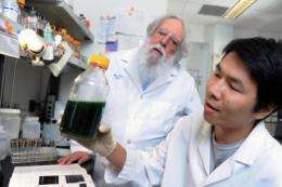 Green and lean: Secreting bacteria eliminate cost barriers for renewable biofuel production