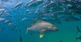 Hidden Baja undersea park is the world's most robust marine reserve