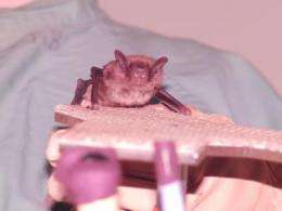 How bats stay on target despite the clutter
