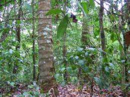 Increased tropical forest growth could release carbon from the soil