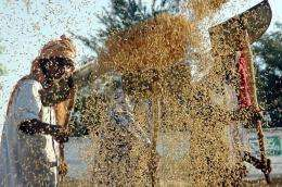 Indian farm labourers use shovels as they separate grains of rice from the husk at a grain market in Amritsar in 2005
