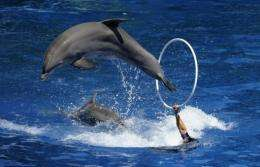 Indonesia said it would consider rehabilitating captive dolphins