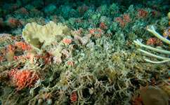 Iron fertilisation would 'significantly' change deep-sea ecosystems