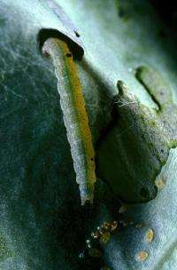 Smarter toxins help crops fight resistant pests