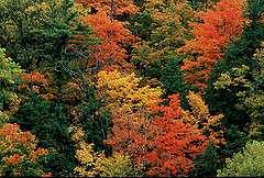 La Nina may dampen fall leaf colors