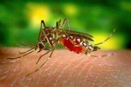 Making blood-sucking deadly for mosquitoes