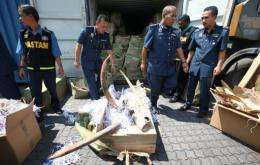 Malaysian custom officers handle elephant tusks seized in the port of Klang on December 13