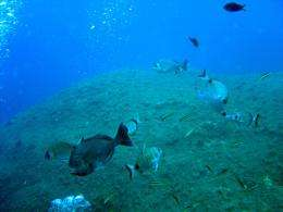 More marine protected areas needed to protect Mediterranean biodiversity