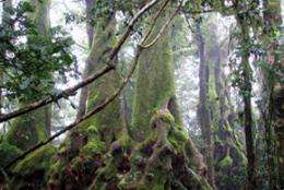 Native trees will ease the carbon credit crunch