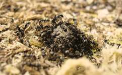 Nature and nurture help ant societies run smoothly