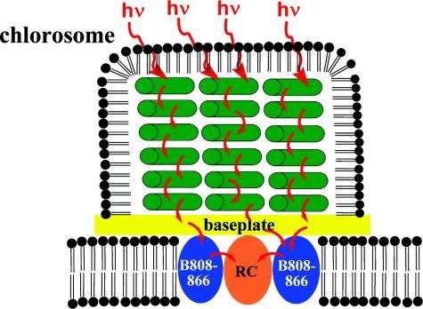 Neutron analysis yields insight into bacteria for solar energy