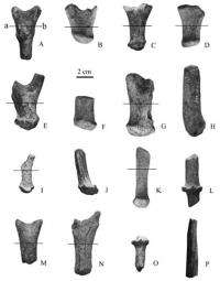 New cervid species found in middle miocene of Nei Mongol, China