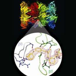 New class of drugs for the reversible inhibition of proteasomes