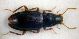 New endemic beetles discovered in Iberian Peninsula