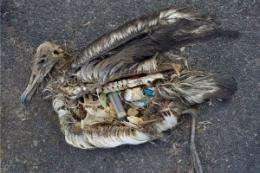Plastic bait strips now banned 'on sea' to protect marine life