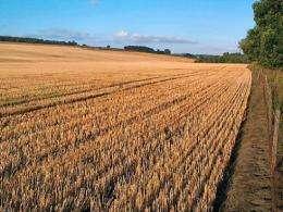 Rising temperatures threaten a food crisis