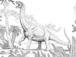 sauropod
