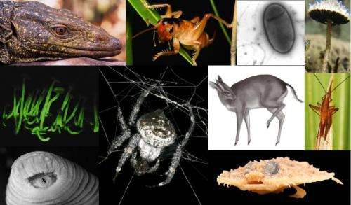 Scientists list top 10 new species