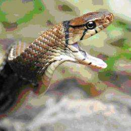 Snake venoms have not revealed all their secrets