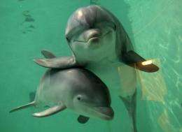 Sound is what cetaceans (large aquatic mammals like whales and dolphins) communicate with